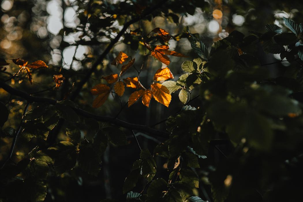 fotograf – Zielona Góra-46