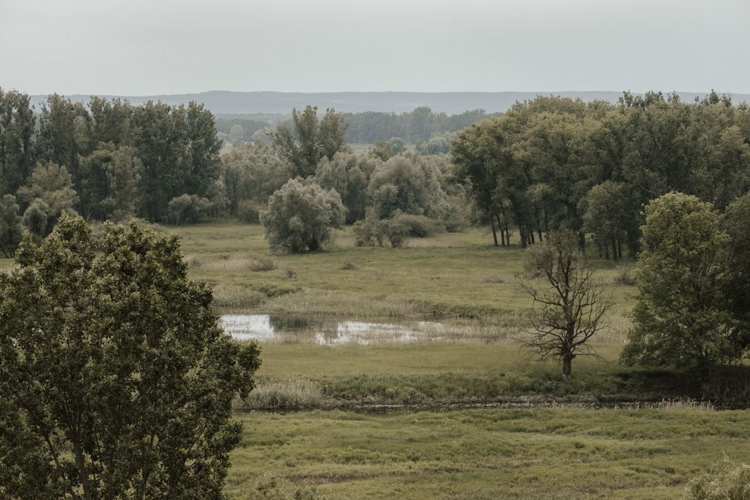 fotograf Zielona Góra – Głogów – Żary-60-93